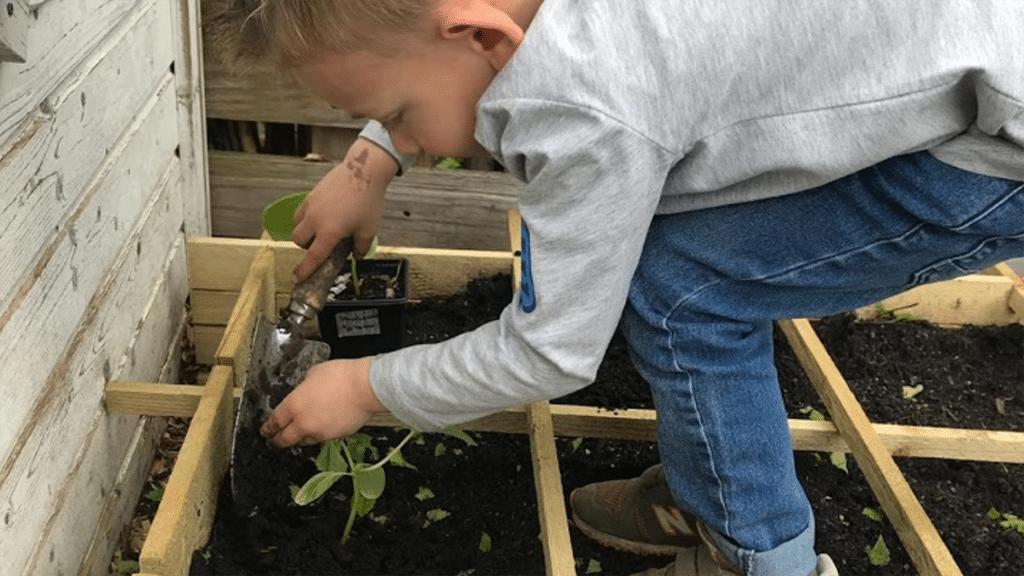 Chase uitplanten
