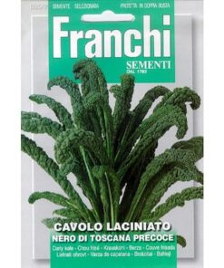 zaden Laciniato Nero Di Toscana