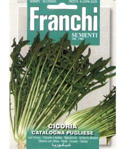 Fr Cichorei, Cicoria Catalogna Pugliese