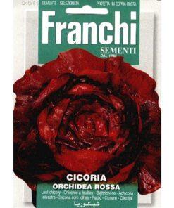 Fr Roodlof, Cicoria Orchidea Rossa