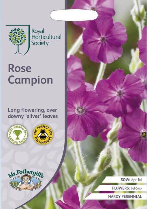 Prikneus Rose Campion