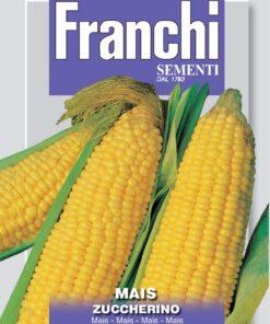 Mais zaden