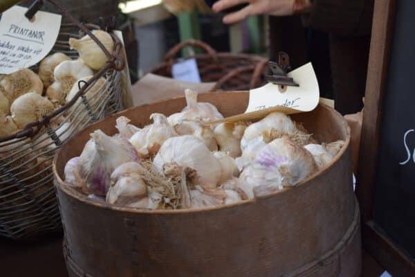 garlic, sättlök, autumn-2381424.jpg