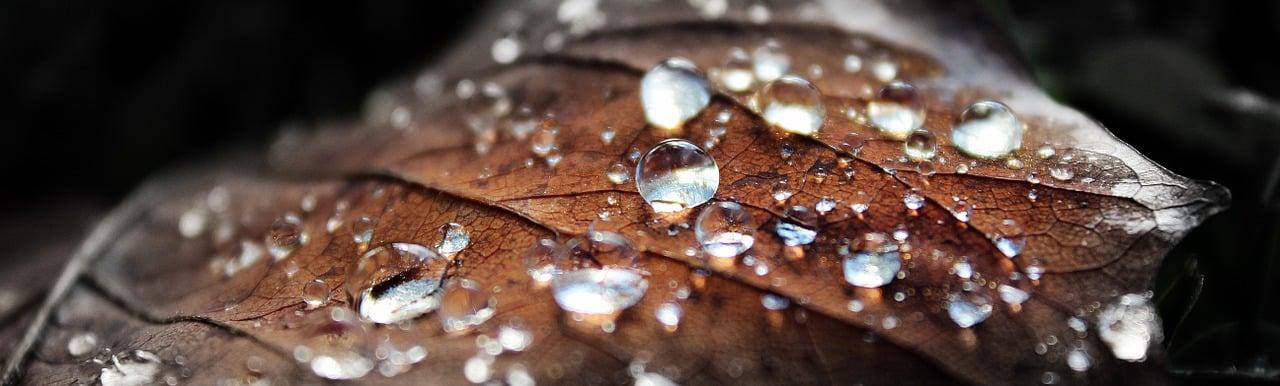 nature, dew, dew drop-497978.jpg