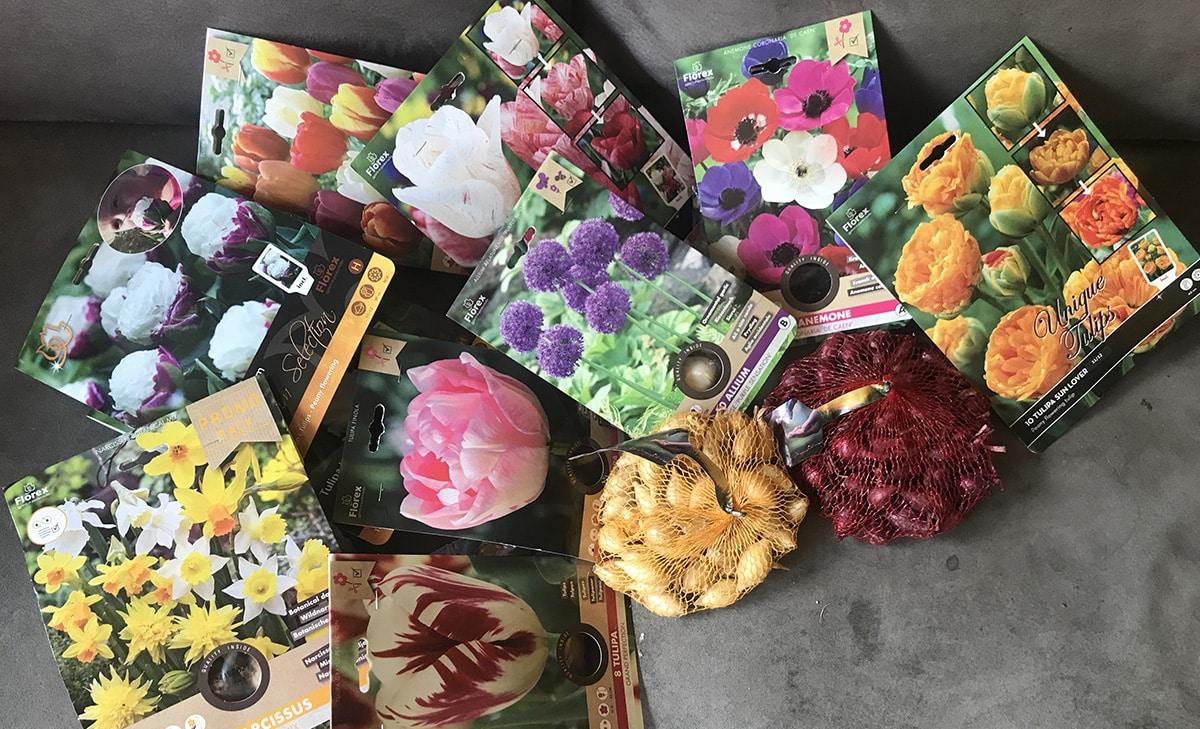 Bloembollen planten in oktober